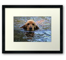 Cocker Spaniel In His Element Framed Print