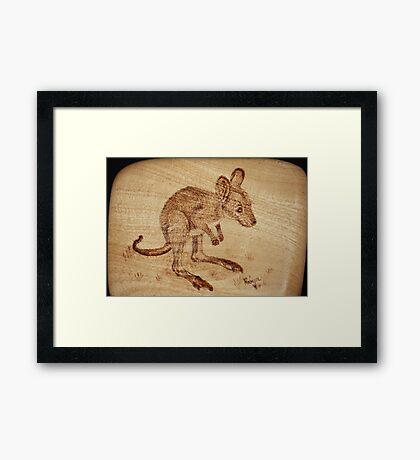 Eastern Grey Kangaroo Joey on Silver Ash Framed Print