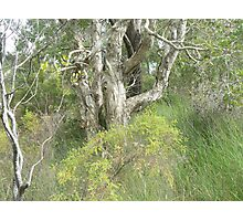 Wooli bushland Photographic Print