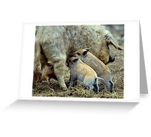 Home, home on the range Greeting Card
