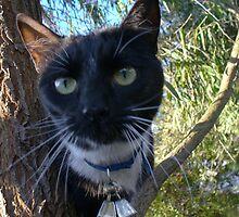 Shorty - the inquisitive cat by DashTravels