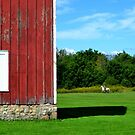 Red Barn & White Horse by Brian Gaynor