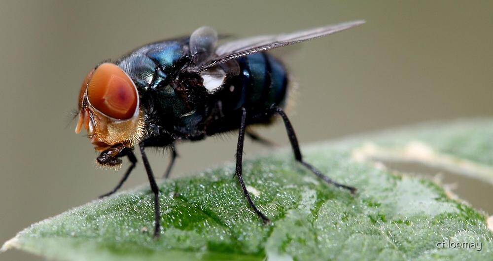 """""""Louie the Fly"""" by chloemay"""