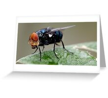 """""""Louie the Fly"""" Greeting Card"""