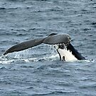 For the Love of the Humpbacks by DEB CAMERON