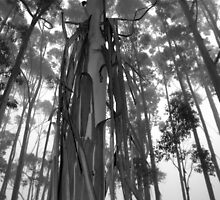 Scary Tree - Summertown Woodlot by Ben Loveday