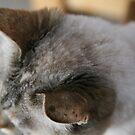 Ears...... by LynnEngland