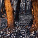 Australian bushfire aftermath by Chris Prior