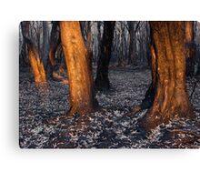 Australian bushfire aftermath Canvas Print