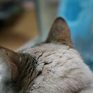 Ears .... by LynnEngland