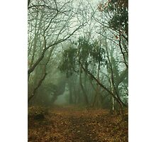Faerie Wood Photographic Print