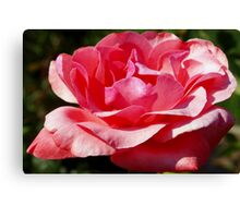 Pink as you please Canvas Print