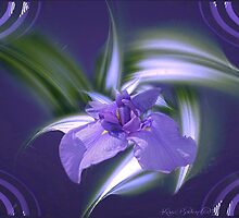 Irresistable Iris by © Kira Bodensted