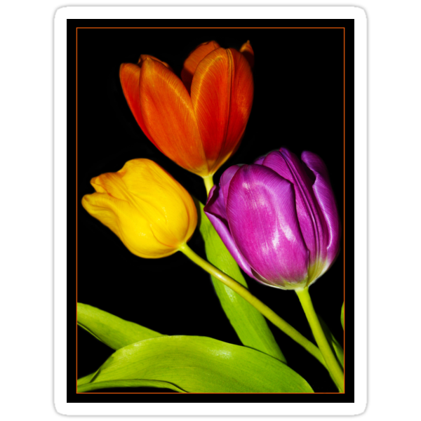 Tulips on Black by BevRice