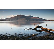 Lone Branch, Lough Leane Photographic Print