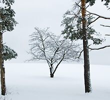 Winter Cherry and Pines by Michael  Dreese