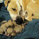 jerzy and her 11 pups by gabbielizzie