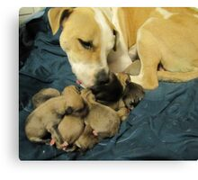 jerzy and her 11 pups Canvas Print