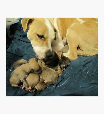 jerzy and her 11 pups Photographic Print