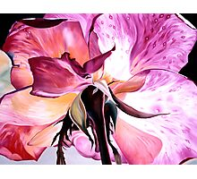 """Beneath a Rose"" - painting of the underside of a rose Photographic Print"