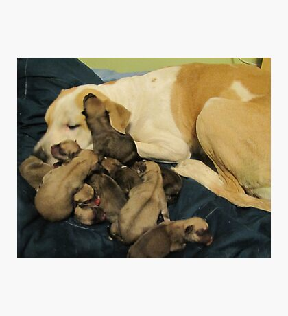 jerzy and babies Photographic Print