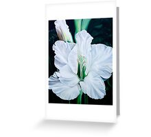 """""""Angel"""" - oil painting of a pure white gladiola flowers Greeting Card"""