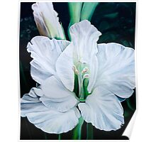 """""""Angel"""" - oil painting of a pure white gladiola flowers Poster"""