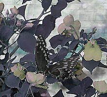 Butterfly Wall by DottieDees