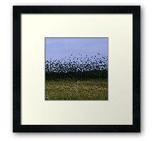 flocking Framed Print