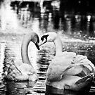 Swan Magic by Karen Kaleta