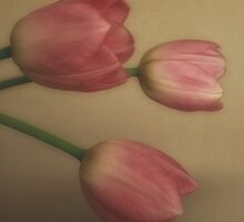 3 heads are better then 1 (pink tulips) by Karen  Betts