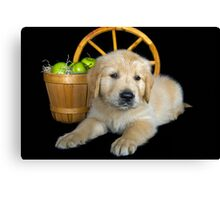 Country Pup Canvas Print
