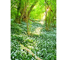Garlic Glade Photographic Print