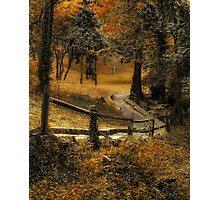 Copper Field Photographic Print