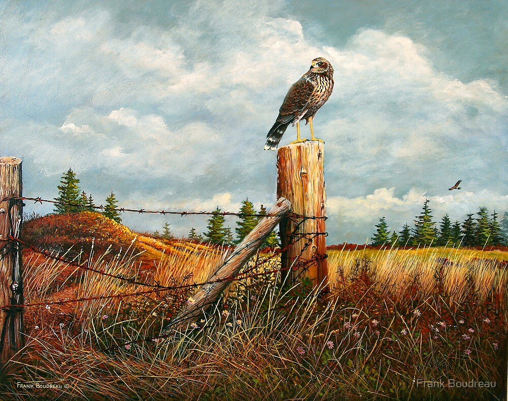 """Watching For Prey"" by Frank Boudreau"