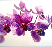 Orchidee... by © Janis Zroback