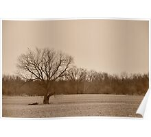 Tree landscape in sepia Poster