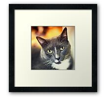 Cat on a Bag Framed Print