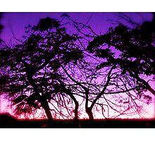 Electric Trees  Photographic Print