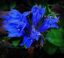 Wild Flower In The Night by Linda Miller Gesualdo
