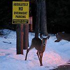 Absolutely No Overnight Parking by Diane Blastorah