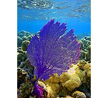Coral fan Photographic Print