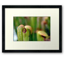 Pitcher Plant Framed Print