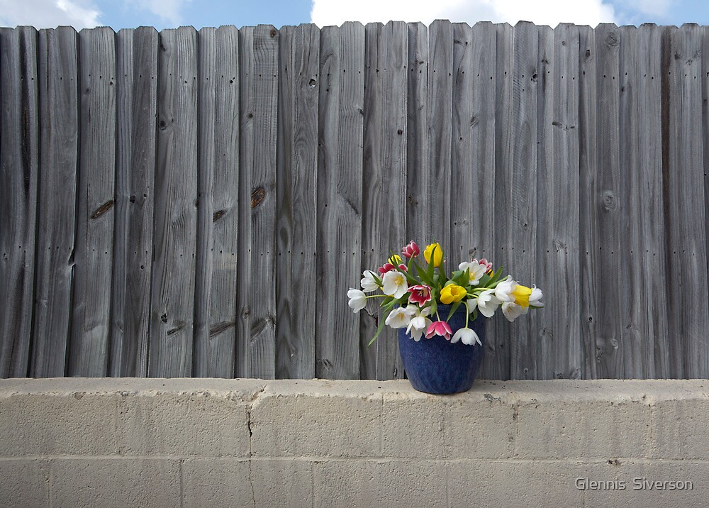 Tulips and a Fence by Glennis  Siverson