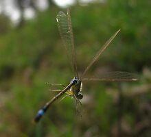 Spider Spun by Amrita Neelakantan