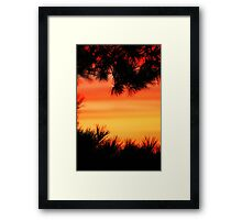 Beauty Through The Branches Framed Print