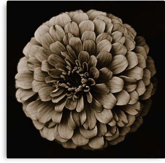 Life Is In The Details VIII [Print & iPad Case] by Damienne Bingham