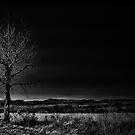 treee by Tyler Johnson