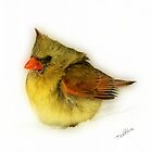 Baby Female Cardinal by Trudy Wilkerson