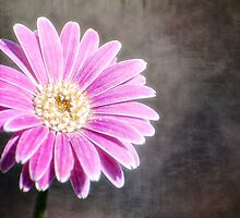Pink & Pretty by Saija  Lehtonen